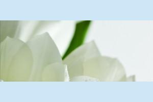 Плитка декоративная Атем Yalta Tulip 2 W