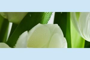 Плитка декоративная Атем Yalta Tulip Maxi 3 W