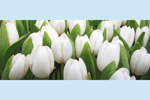 Плитка декоративная Атем Yalta Tulip Mini W