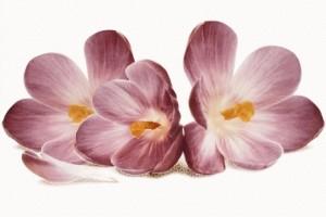 Плитка декоративная Cersanit - Casablanca flower