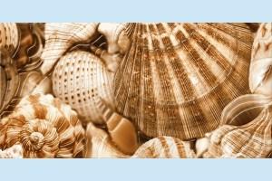 Плитка декоративная Golden Tile - Sea Breeze Shells Е11431