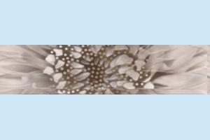 Плитка декоративная Golden Tile - Зебрано К61311
