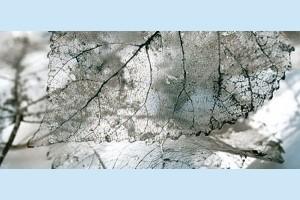 Плитка декоративная Intercerama - Magia Д 61 071 2