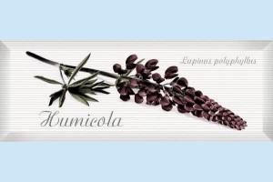 Плитка декоративная Intercerama - Pergamo Д 123 061 - 5