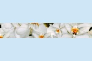 Плитка декоративная Керамин - Фриз Энигма 3