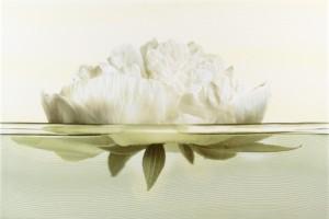 Плитка декоративная Opoczno - Flora inserto peony